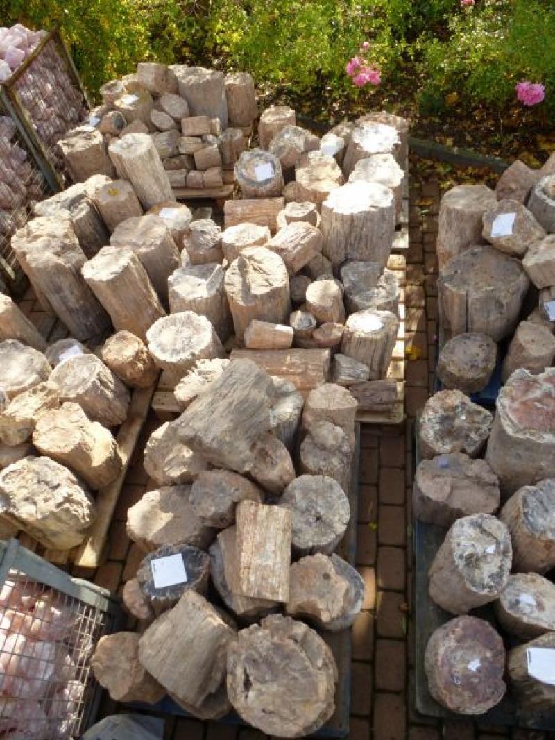 Fossiles (versteinertes) Holz, einseitig gesägt, Madagaskar, 100 kg
