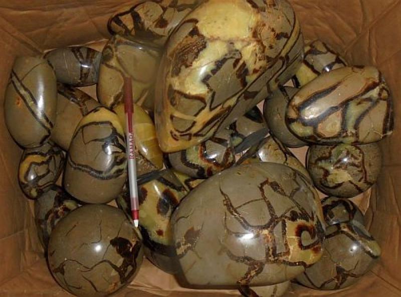 Septarien, poliert, Madagaskar, 10 kg