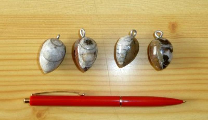 Orthoceras Anhänger 4-8 cm mit Öse (braun, ründlich), 10 Stück