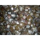 Ammoniten, Herzform, mit Öse als Anhänger. 1 Stück