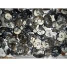 Goniatiten, beidseitig poliert, ca. 8 cm, Marokko, 1 Stück