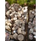 Fossiles (versteinertes) Holz, einseitig gesägt, Madagaskar, 1 kg
