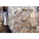 Korallenjaspis, fossile Koralle, Indien, 100 kg