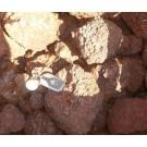 Eisenoolith, Eisenrogenstein, oolithisches Eisenerz, Kalkoolith, Sambia, 100 kg
