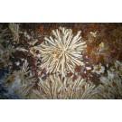 Micromount Mineralien aus Deutschland, Partie von 10 Steigen