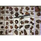 Spessartite, Garnet, crystals medium size, Tanzania, 1 flat