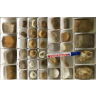 Fish fossiles, mixed, Morocco, 1 flat