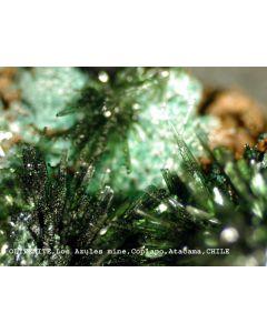 Olivenit xx; Mina El Guanaco, East Catalina, Taltal, II-Region, Atacama Desert, Chile; KS