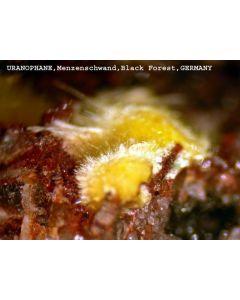 Uranophan xx; Menzenschwand, Schwarzwald, D; MM