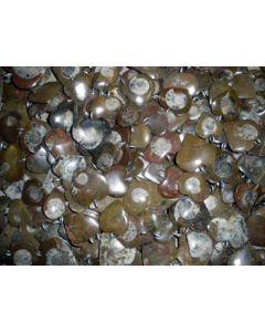 Ammoniten, Herzform, mit Öse als Anhänger. 100 Stück