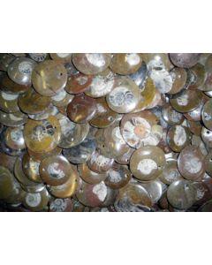 Ammoniten, rund, 4 cm mit Loch als Anhänger, 100 Stück