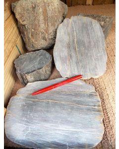 Fossiles (versteinertes) Holz, gesägt oder roh, Zeithain, Sachsen, D. 1 kg