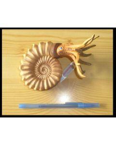 "Ammonit ""Pleuroceras"" Replik von Bullyland, 1 Stück"