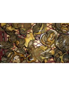Septarien, poliert, Madagaskar, 1 kg