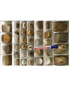 Fischfossilien, gemischt, Marokko, 1 Steige