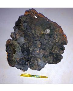 Siderit Kristalle in Toneisenstein; Arpke, Niedersachsen, Deutschland; MS