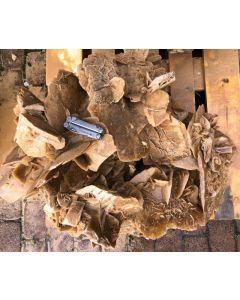 Sandrosen, Tunesien, Museumsstück #5 (ca. 140 kg)