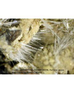 Clinocervantite xx; Tafone Mine, Manciano, Grosseto, Tuscany, I; MM