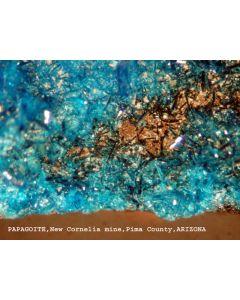 Papagoite (xx); Ajo, AZ, USA; MM