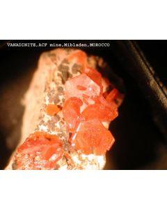 Vanadinite xx; Mibladen, Midelt, Morocco; NS