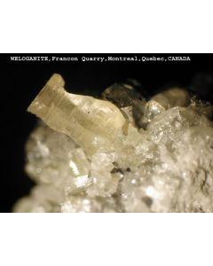 Weloganite xx; Francon Quarry, Quebec, Canada; MM