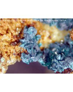 Zalesiite xx; Inca de Oro, Chile; MM