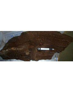 Petrified wood with quartz xls, Schwenkau, Saxony, Germany, 1 kg