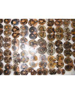 Ammonites pairs, polished, 2-4 cm, 1 pair